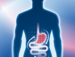 blue-outline-red-stomach-1024x1024
